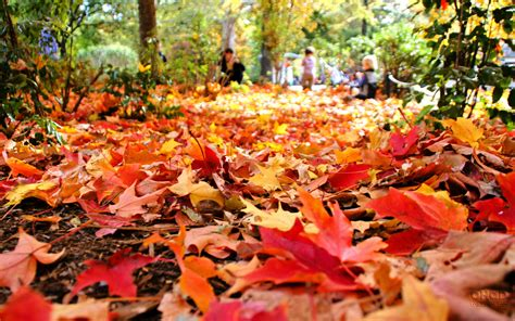 Fall Leaf And Yard Cleanup In St. Catharines