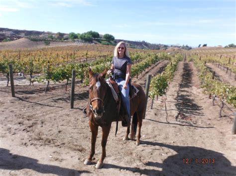 vineyard riding horse ride temecula wineries ranch susie horseback winery