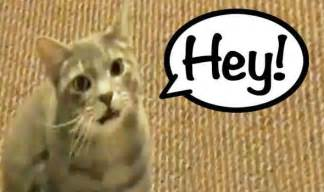the cat that says hey is the to go