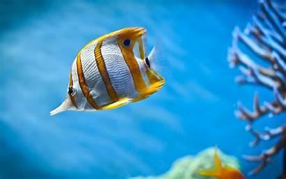 Fish Wallpapers Desktop Pixelstalk Tank