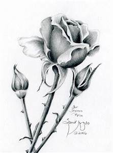 Pencil Drawing Of Flowers - ClipArt Best
