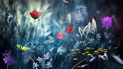 Flower Different Flowers Screensaver цветы Cool Mariano
