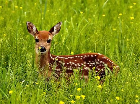 Animal Deer Wallpaper - beautiful frog wallpaper for free beautiful deer