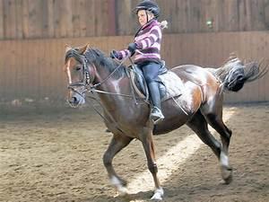 Bilder Von Pferden : ergebnis f r ein weiteres foto aus der serie kinder mit pferden ein galoppierendes pferd ~ Frokenaadalensverden.com Haus und Dekorationen