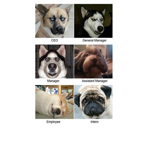 funny dog memes dogtime