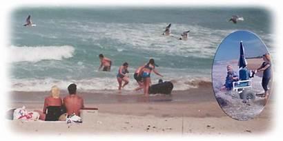 Beach Playalinda Seashore Fl Florida Canaveral National