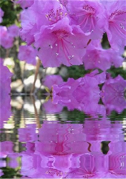 Flowers Purple Animated Gifs Flower Hearts Animation