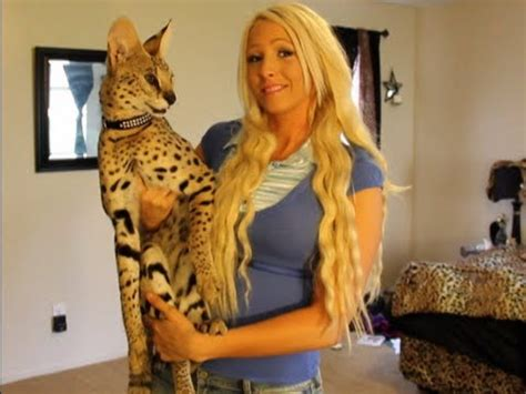 Zeus The Serval Why The Savannah Is A Better Choice