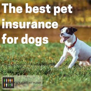 pet insurance  dogs  bought
