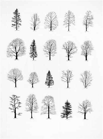 Desenhar Para Coisas Types Tree Salvo Uploaded