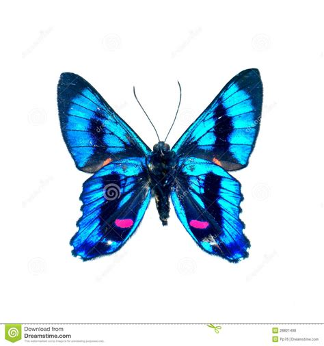 butterfly   white background  high definition stock