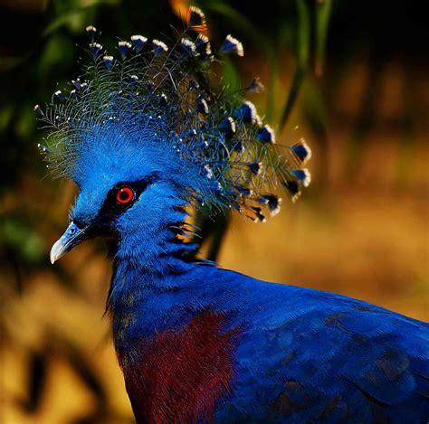 Tropu lietusmežu bagātīgais skaistums - dzīvnieki - Tropiskie meži!!!