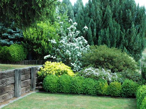 fast growing fence cover hedging screen plants evergreen in the 2 5 metre range fence cover privacy 171 ross conifers