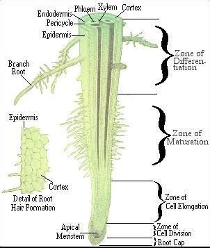 biosfer struktur fungsi tumbuhan