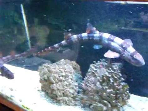 shark aquarium feeding