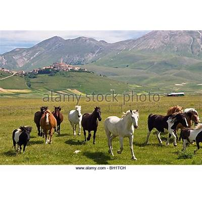 Monti Sibillini Nationalpark Stock Photos &