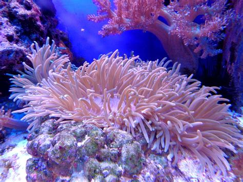 sea reef aquarium free photo coral cay aquarium sea reef free image on pixabay 1053834