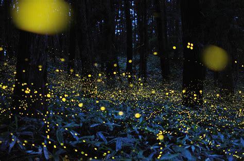 jar lights starry with gold fireflies e infinity