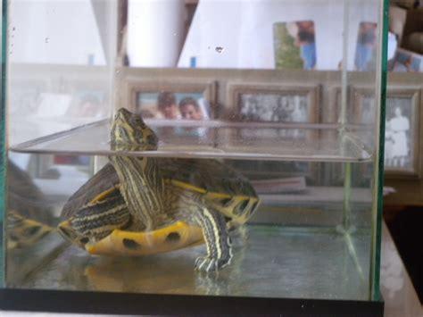 ma tortue d eau galerie la tortue facile