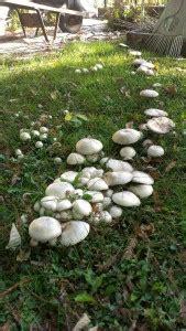 Pilze Im Garten Selber Züchten by Pilze Im Eigenen Garten Z 252 Chten So Gelingt Es Auch Ihnen
