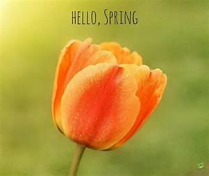 """Hello, Spring!"" Quotes"