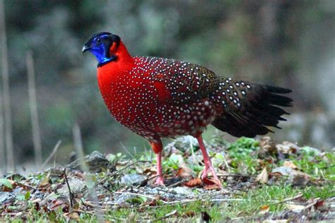rockjumper worldwide birding adventures  birds