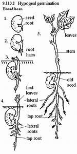 Kidney Bean Diagram Gallery