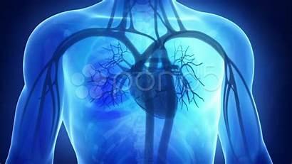Medical Cardiology Backgrounds Medicine Heart Desktop Related