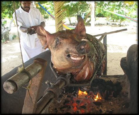 pig roast roasting roasted pork ground being vicious spit funny rotisserie cultures done sunday historically across long bar magnificent jon