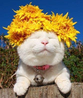 fiori di bach per i cani fiori di bach per cani e gatti come si scelgono fiori