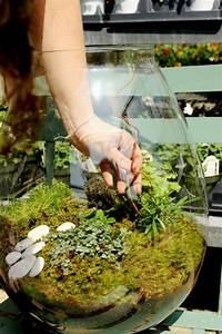 Pflanzen Für Terrarium : terrarium selbst bauen oder wie erstellt man eine mini pflanzenwelt ~ Orissabook.com Haus und Dekorationen