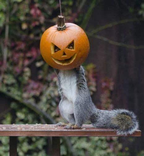 spooky zoo animals   halloween spirit  posing