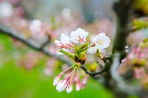 Fotografuok! Žydintis pavasaris! - DELFI Pilietis