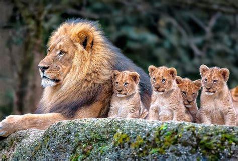 Animal Cubs Wallpapers - wallpaper cubs animals zoo desktop wallpaper