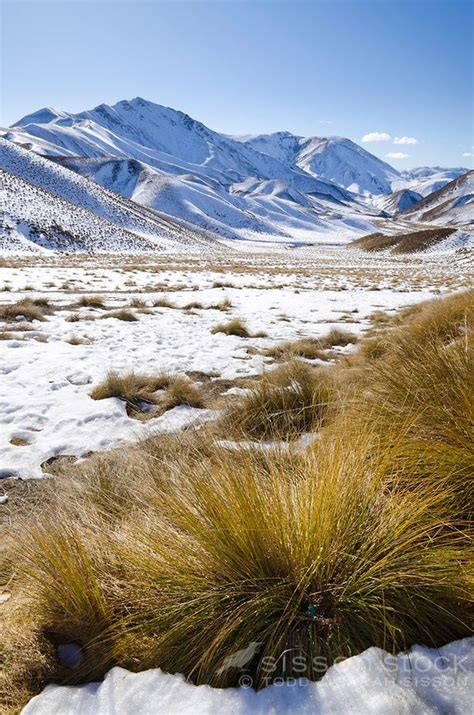 Snow Covered Hills And Tussock Grasses On A Sunny Winter