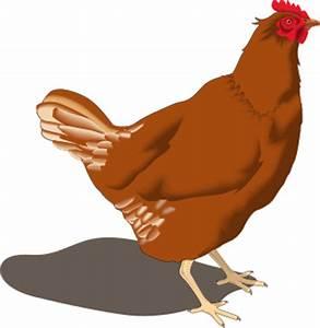 hen - /animals/birds/C/chicken/hen/hen.png.html