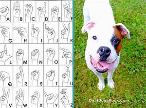 beginning sign training deaf dogs rock With deaf dog training