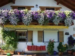 Blumenkästen Bepflanzen Sonnig : balkonk ste bepflanzen page 2 mein sch ner garten forum ~ Orissabook.com Haus und Dekorationen