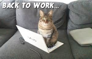 cat work cat back to work and new year resolutions the cat