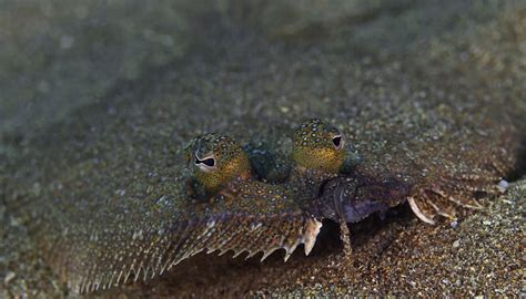 flounder sole between difference istock gettyimages