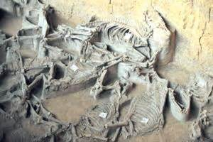Saudi Archaeologists Claim Earliest Evidence of Horse ...