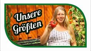 Tomaten Selber Anbauen : tomaten selber anbauen tomatensorten im vergleich gro e tomaten gro e vielfalt youtube ~ Orissabook.com Haus und Dekorationen
