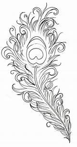 Coloring Peacock Pages Adult Google sketch template
