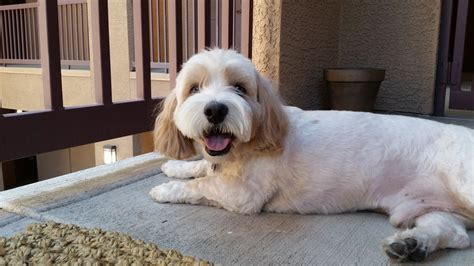 dogs grooming boutique    reviews