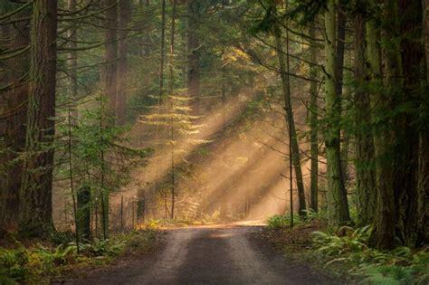 types  cedar trees  wood