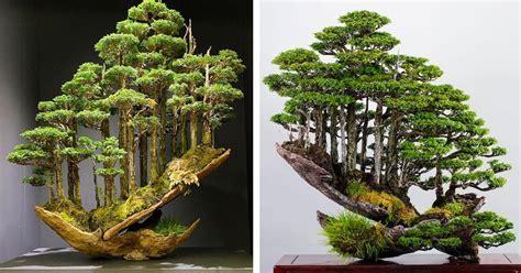 Behold the Artistry of Bonsai Master Masahiko Kimura