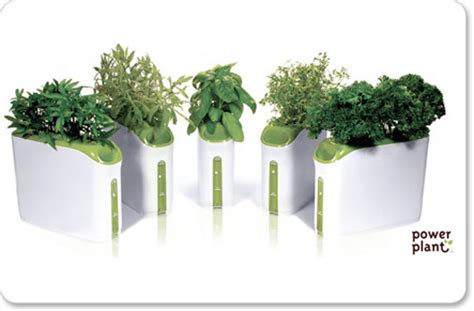 hydroponic gardening at home