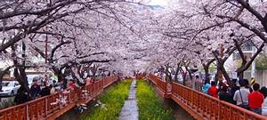 Spring is coming: Up and coming festivals in Korea ...