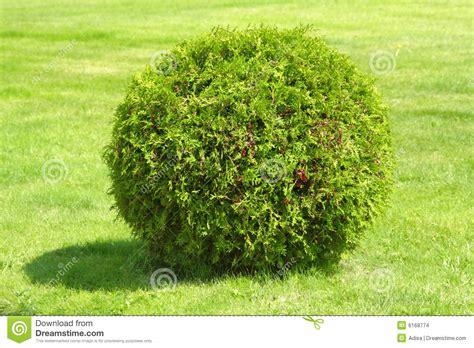 of bush green bush stock images image 6168774