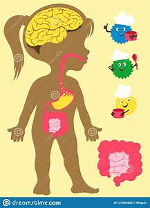 Food Digestion Time Chart Children Anatomy With Digestive System Royalty Free Stock